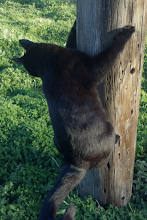 Photo: Baby J had just gone bouncing across the yard to climb one of the fence posts....