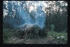 Papua. Tribes Baliem Valley Time Travel. Hut in the jungle
