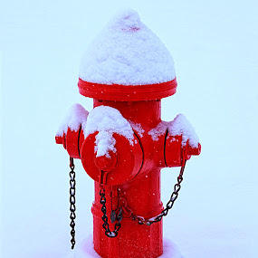 Always RED E* by Rob Bradshaw - Artistic Objects Other Objects ( red, snow, always red e, fire hydrant, emergency, fire, water )