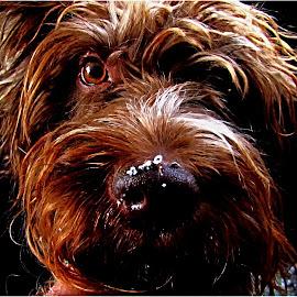 by Fred Starkey - Animals - Dogs Portraits (  )