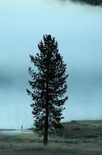 Photo: Heron in Fog, Medicine Lake, Shasta National Forest, California