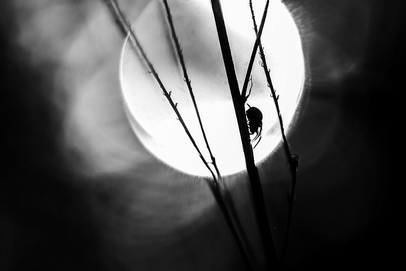 oscure presenze di Cinzia_torelli