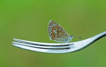 Photo: Haute Cuisine  http://lepidoptera-butterflies.blogspot.com/
