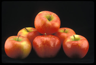 Photo: 'Honeycrisp' apple developed by the University of Minnesota Agricultural Experiment Station.  Released in 1991.  Fruit breeders Dave Bedford and Dr. Jim Luby.  Excellent fresh eating, explosively crisp and juicy, unusually long storage life.  Ripens the last week of September in Minnesota.