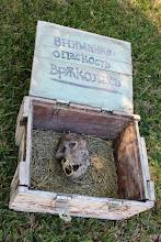 Photo: Bulgarian werewolf skull found inNovo Selo, close to Stip in Macedonia.