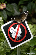 Photo: A butterfly's wings are fragile so don't touch!