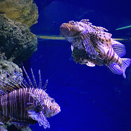 Lion fish by Janette Ho - Instagram & Mobile iPhone