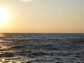 Photo: 夕方、現地に着くと、ウルメイワシがガンガン湧いてました!