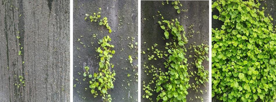 Evolución sistema Leaf.skin