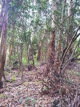 Photo: Plenty of native trees here.