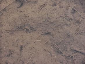 Photo: Pupki v mlaki.