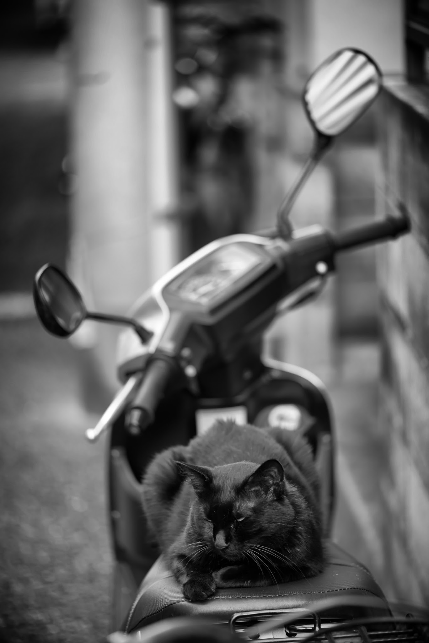Photo: Biker cat  I know I posted this one to the #GPlus2YearAnniversary  group album before, but I wanted this in my own album as well since I rather liked it.  Plus, I was taking care of 4 cats this weekend, so it seemed fitting.  This weekend went by too fast... Monday again, and time to head off to work.. (T_T)  Settings: D800E / ISO 200 / 105mm / f3 / 1/200s  #blackandwhite   #cat   #Tokyo   #Japan