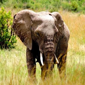 by Thean Jonck - Animals Other Mammals