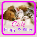 Cute Puppy & Kitten Wallpapers icon