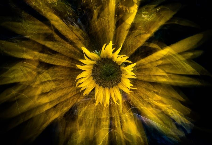 Sunflower Splash by Craig Turner - Digital Art Abstract ( flowers, zoom, abstract, sunflower, ca )