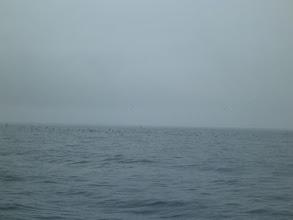 Photo: 鳥もベイトを狙って、時折激しく 水面で騒いでいます。