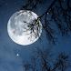 自然音 - 夜をリラックス