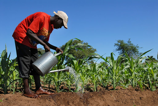 SA agriculture has some valuable lessons for struggling Malawi