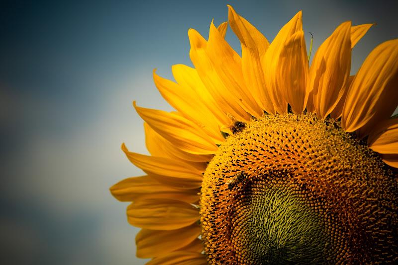 Yellow world di sergiofalzone