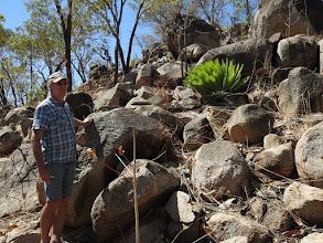 Photo: Day 4 - Rare Cycad, Cycas conferta, near Pine Creek