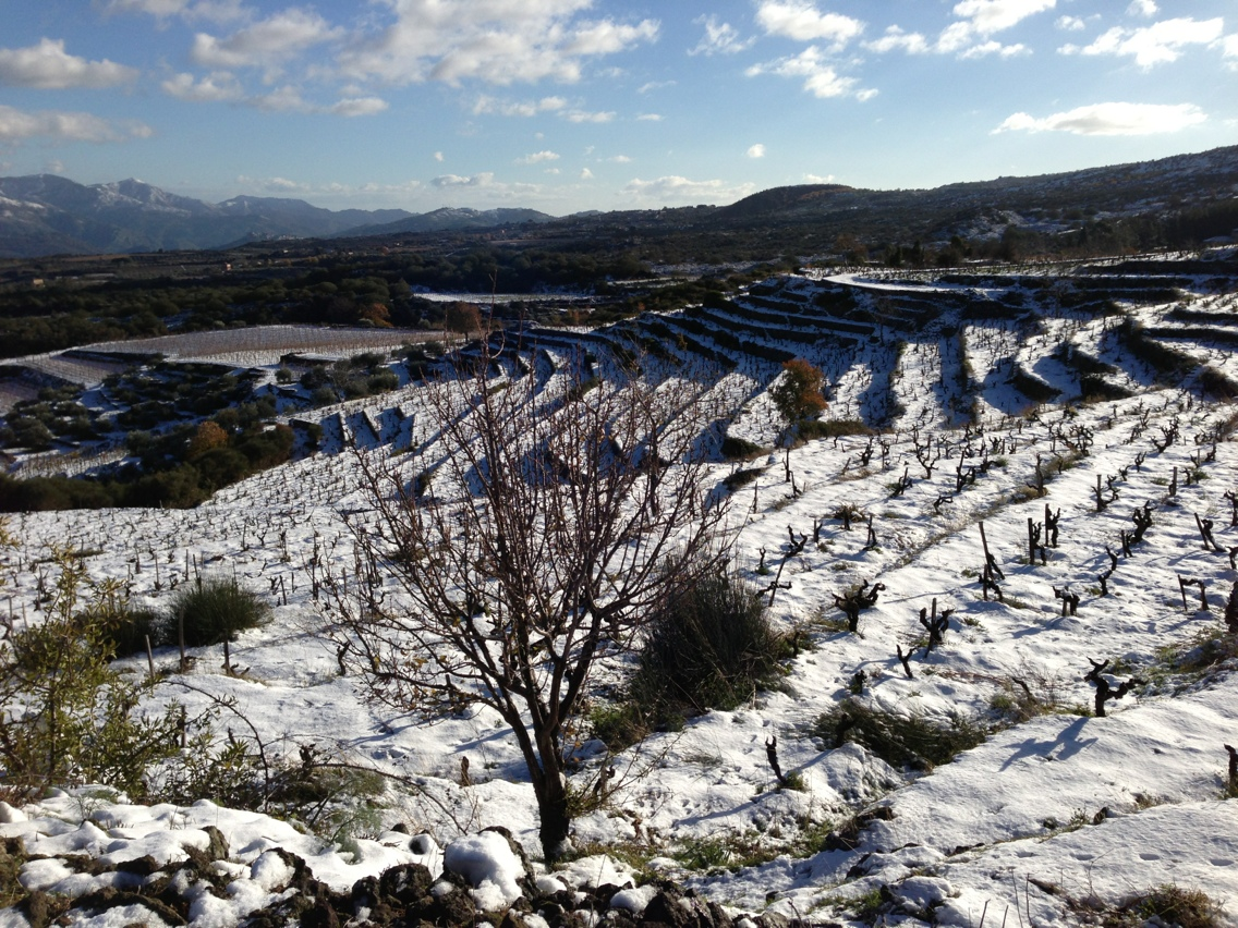 Passopisciaro vineyards in winter.