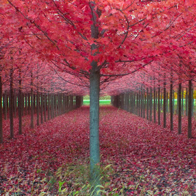Umbrellas by Samer Shaur - Nature Up Close Trees & Bushes ( fall leaves on ground, fall leaves )