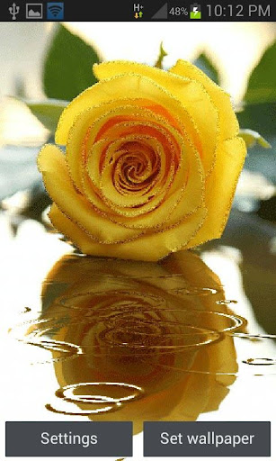 Yellow Rose Shine LWP