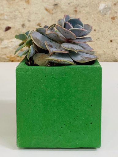 plante dans pot design en béton VERT