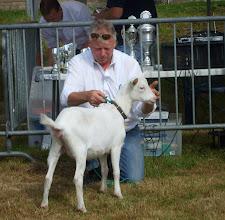 Photo: Rubriek 1: wit lam geboren op 18-2-2014. 1a. Janneke BB19