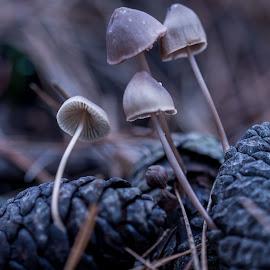 by Grigoris Koulouriotis - Nature Up Close Mushrooms & Fungi ( pinecone, fungi, nature, outdoor, pine needles, nature photography, nature close up, woods, mushrooms,  )