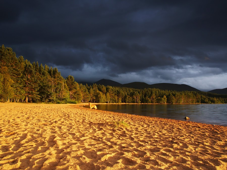 Golden Sunset by Richard Byers - Landscapes Beaches