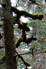 Photo: Moss grows everywhere