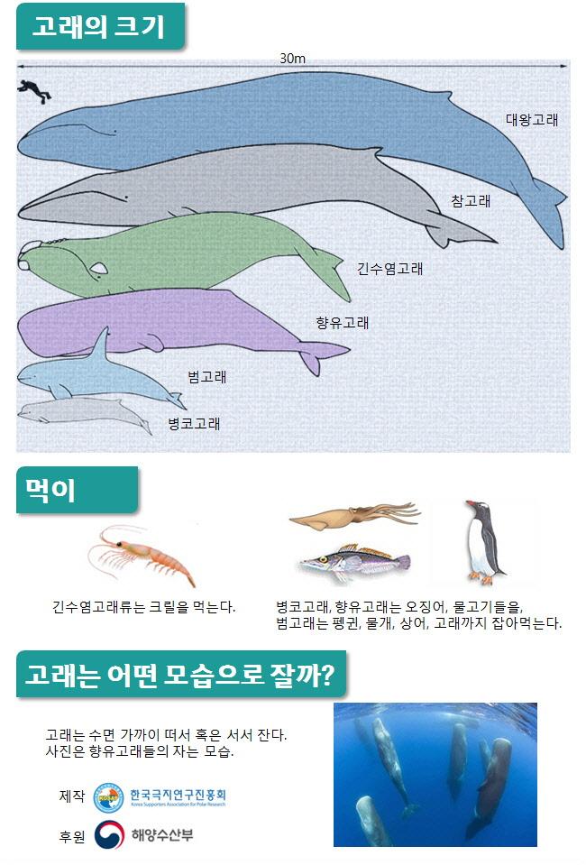 인포그래픽 고래3