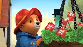 Paddington Chooses a Best Friend; Paddington and the Lamppost thumbnail