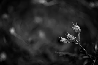 Photo: #blackandwhite  #flowers  #monochrome
