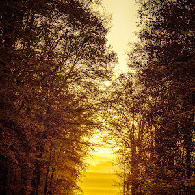 The gate to sunshine by Anne-Cecile Pflieger - Landscapes Forests ( countryside, pathway, prairies, layers, way, meadows, forest, road, country, field, annececilegraphic, tree, path, trees, sunshine, france, view,  )