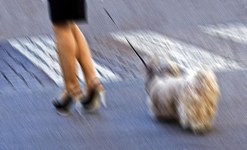 La signora e il cagnolino di carlo-bi