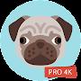 Pug Wallpapers 4K Pro Pug Backgrounds временно бесплатно