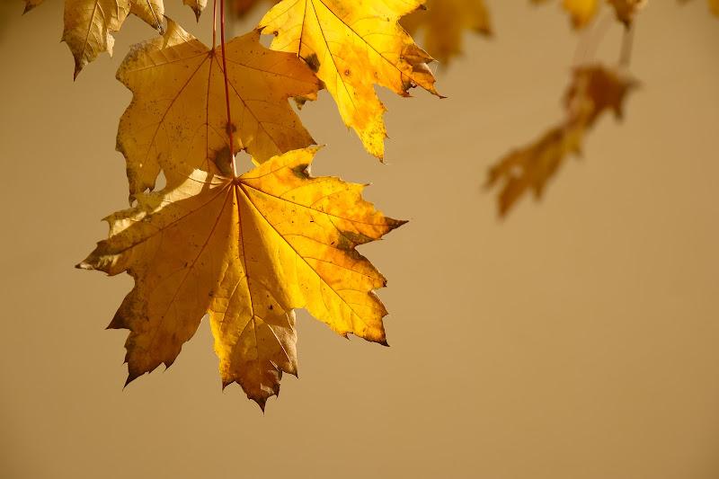 Luce d'autunno di E l i s a E n n E