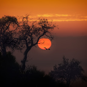 Amanecer entre Almendros  by Antonio Navarro - Landscapes Travel