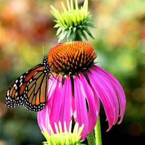 by Barbara Lokken - Flowers Flower Gardens