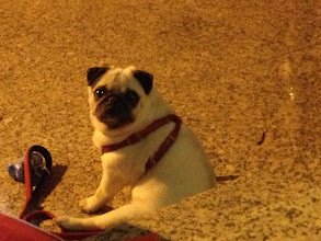 Photo: spanish love dogs.. you see them everywhere with the owners, even to the shops!
