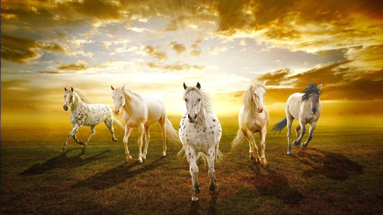 Hd wallpaper horse - Seven Horses Wallpaper 7 Screenshot