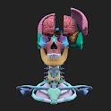 The Brain AR App icon