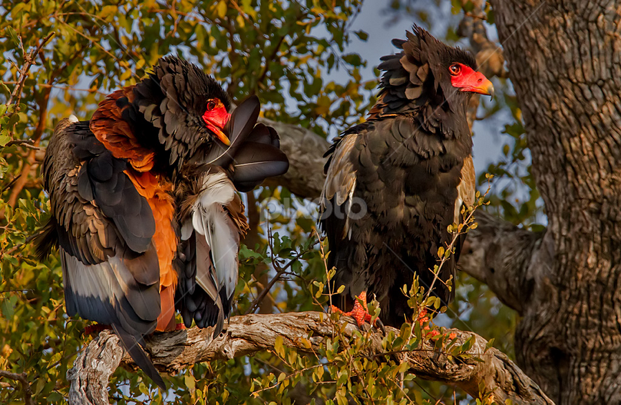 by Nobby Clarke - Animals Birds (  )