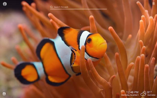 Clownfish HD Wallpapers New Tab Theme