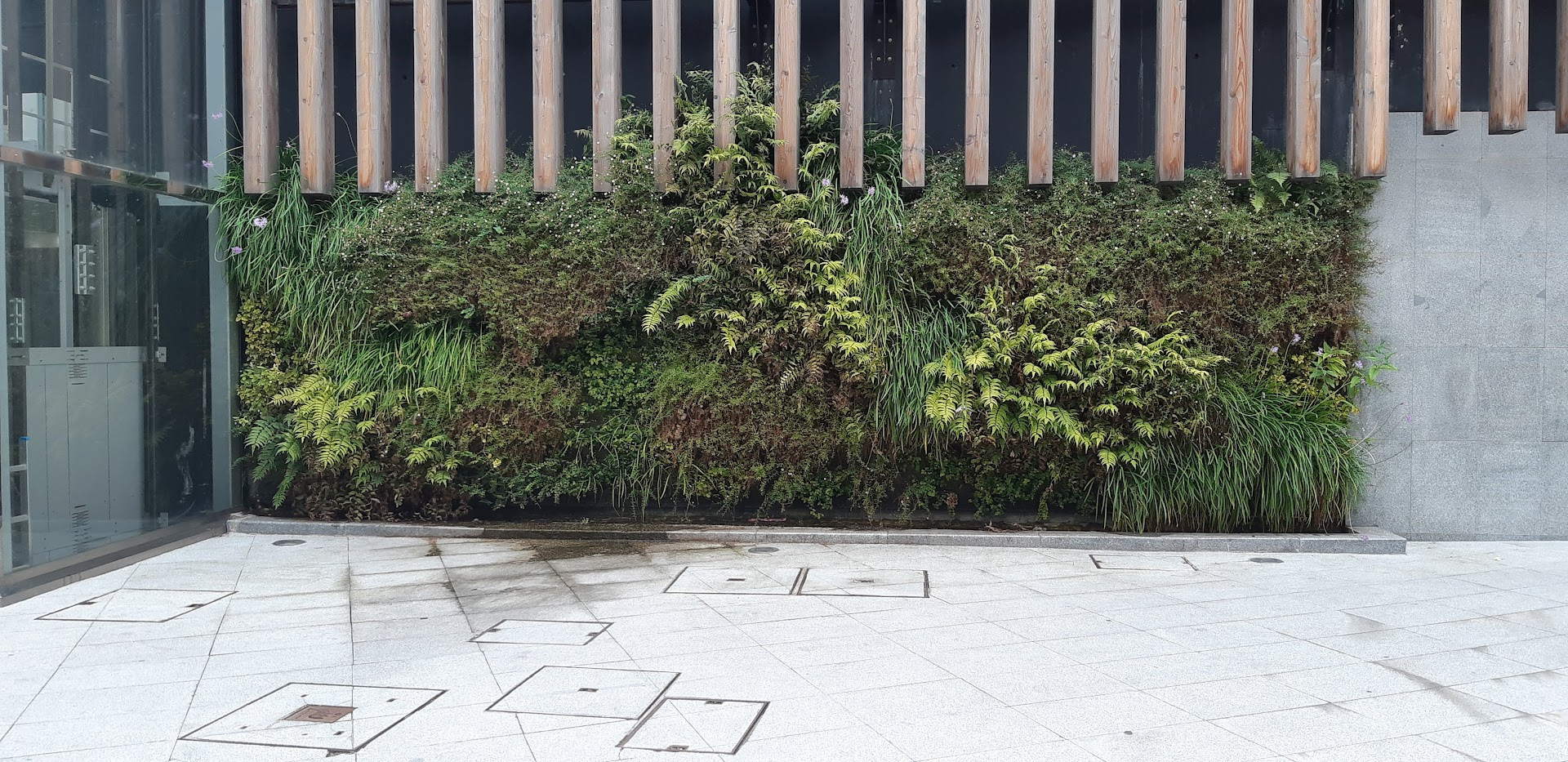 Jardín vertical en Bilbao en junio 2019