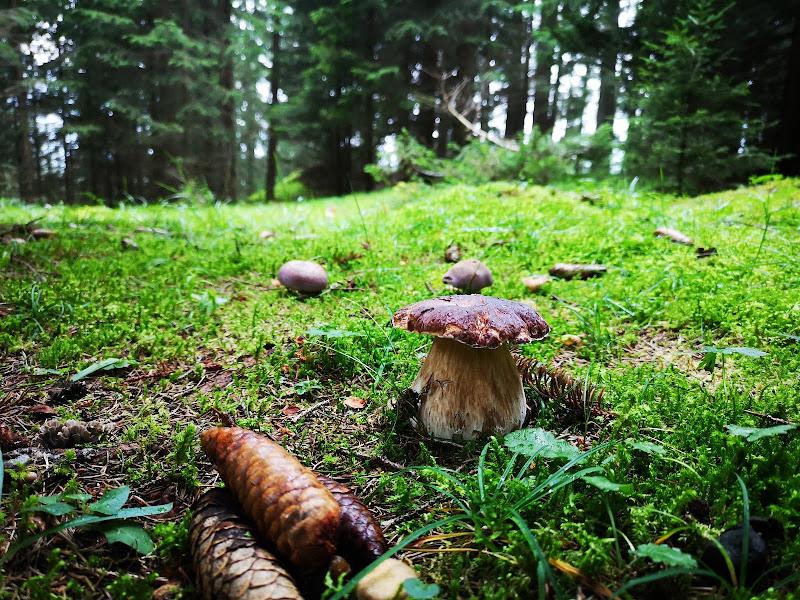 Profumo d'autunno nel bosco di lisagrigoli