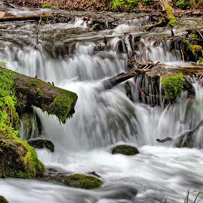 Water by Randi Hodson - Landscapes Waterscapes ( water, logs, green, waterfall, river )