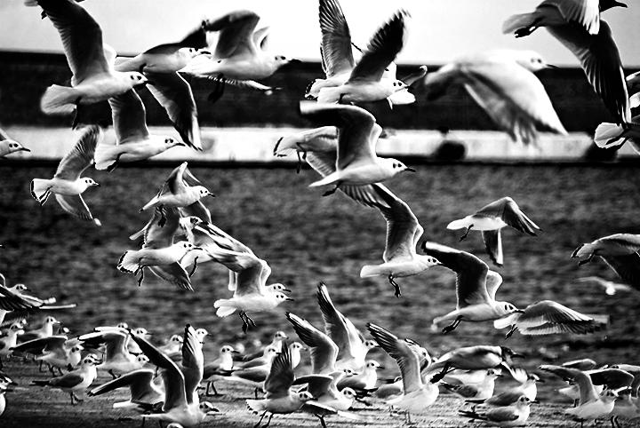 The birds...1963 di Loredana Pagana